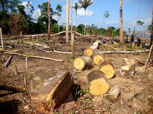 Área desmatada na Amazônia. (Fonte: Tarcisio Schnaider/Shutterstock/Reprodução)